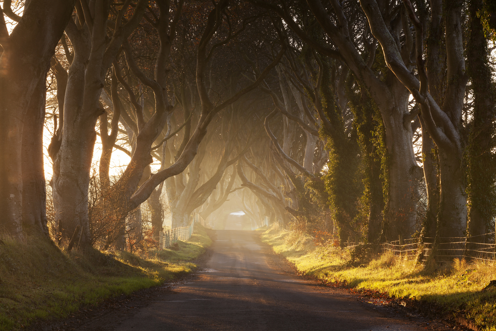King's Road (The Dark Hedges, Northern Ireland)